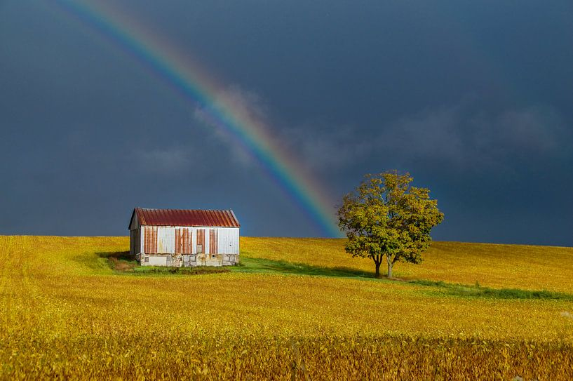 Regenboog boven goud-geel Canadees bonenveld von Sandra van Kampen