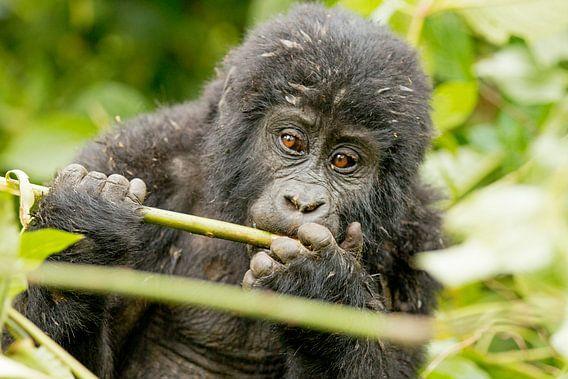 Junger Gorilla van Britta Kärcher