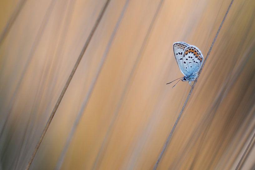 Vlinder in gras van Daan de Vos