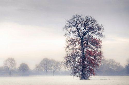 Winter boom in de mist