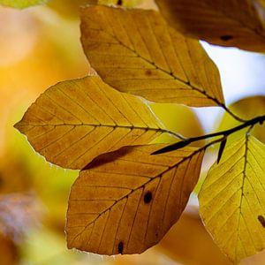 Herfst blad van Ton de Koning
