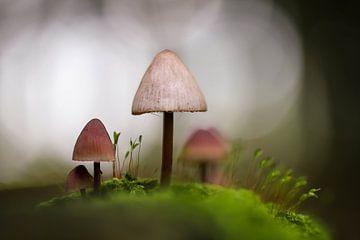 Paddestoelen in het sprookjesachtige bos van Isabel van Veen