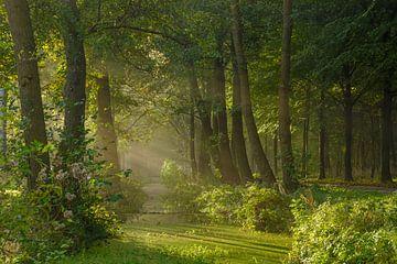 Zauberwald von Dirk van Egmond