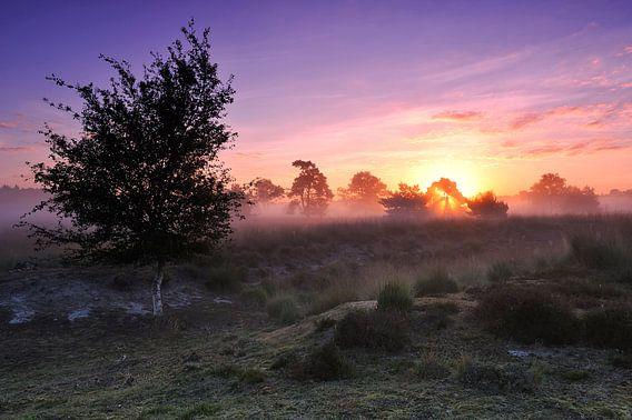 Kleurrijke zonsopkomst in Natuurgebied De Pan