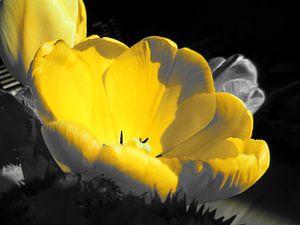 Gele bloem sur Dave van den Heuvel