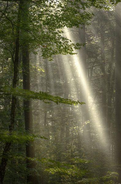 Good Morning! van Hans Kool