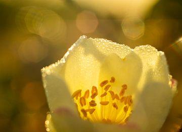 Das Morgenlicht von peterheinspictures