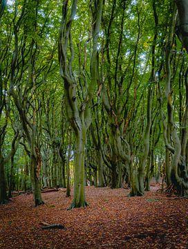 Swingende bomen - Herfst - Mildenburgbos van Arisca van 't Hof
