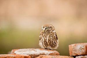 Owl von Bart Vodderie