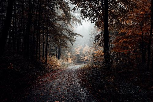 Waldweg 011 van Oliver Henze