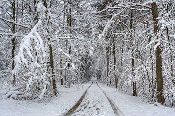Winterbos op wandelpad nr. 5 van Uwe Ulrich Grün