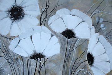 Weiße Mohnblüten