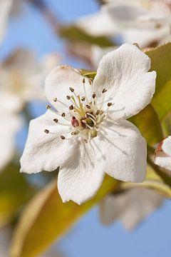 Zonovergoten witte bloem met onscherpe achtergrond tegen een blauwe hemel van Tony Vingerhoets