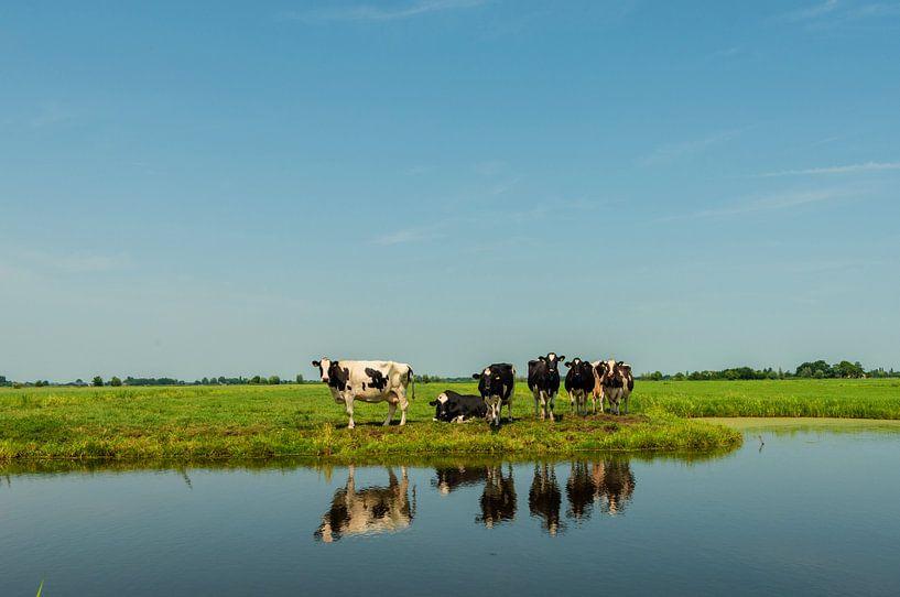 Stel Koeien aan het Water van Brian Morgan