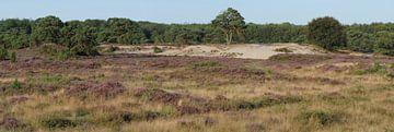 heideterrein met zandverstuiving, boswachterij Echten van Wim vd Neut