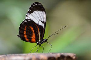 Vlinder in focus van