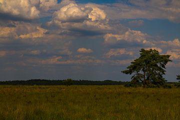 Groot open landschap op de Veluwe van Jeroen Beemsterboer
