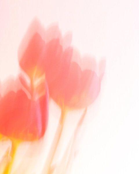 Dansende tulpen van bird bee flower and tree