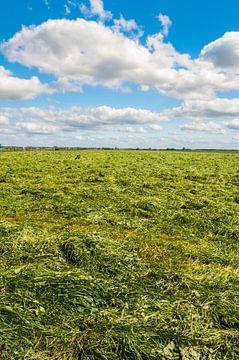 Gemaaid gras van Richard Janssen
