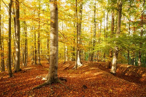 Bunter herbstlicher Laubwald van