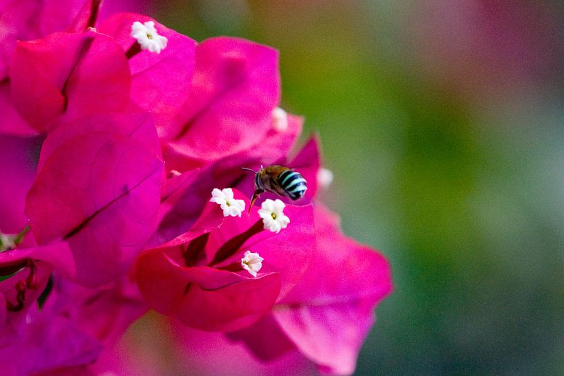 Bee Inspection van BL Photography