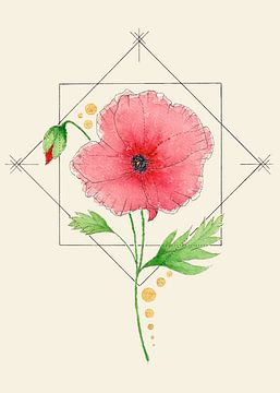 Femininer Fokus | Die Mohnblume von Kirsten Jense Illustraties.
