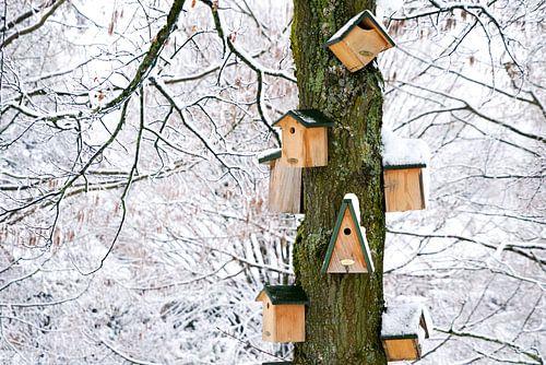 Vogelhuisjes in de winter