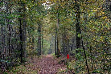 Wanderweg im Wald mit Perspektive auf die Herbstbaumreihe von Trinet Uzun