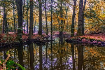 Sprookjesbos tijdens de herfst van Dennisart Fotografie