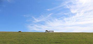 Ciel bleu au-dessus des moutons sur la digue verte