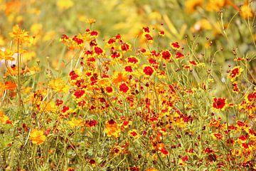 Gelbe Blütenwiese van Heike Hultsch