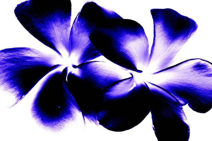 Blue twins van Ernst van Voorst