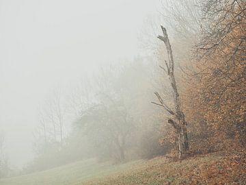 Getuige van de tijd in de herfstmist van Max Schiefele
