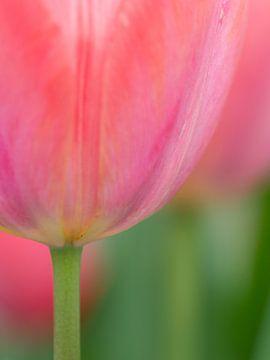 Frühling Zärtlichkeit von Cynthia Derksen