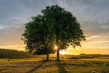 Zonsondergang, Lentevreugd van Carla Matthee