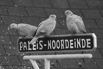 """Tourterelles ensemble sur une assiette avec """"Paleis - Noordeinde&quot ; sur Niels Ten Klooster"""