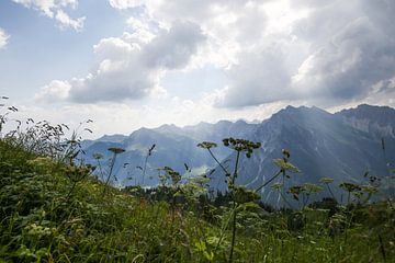 Alpine panorama with herbs van