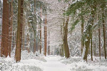Februar Schnee im Wald von Cor de Hamer