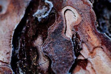 Baumrinde mit Frost auf der Veluwe von Tim Annink