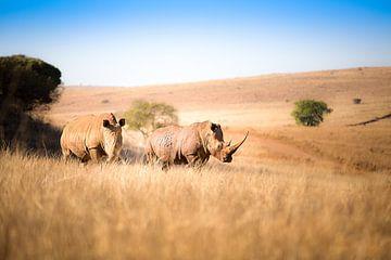 Nashorn Paar von