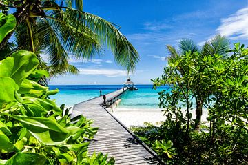 Blick ins Tropenparadies durch eine fast unbewohnte Insel von Michael Bollen