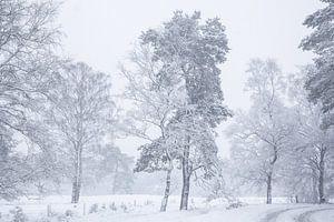 Sneeuw landschap op de Veluwe