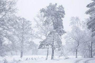 Sneeuw landschap op de Veluwe von Elroy Spelbos