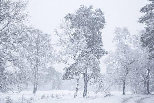 Sneeuw landschap op de Veluwe van