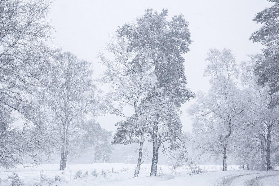 Sneeuw landschap op de Veluwe van Elroy Spelbos