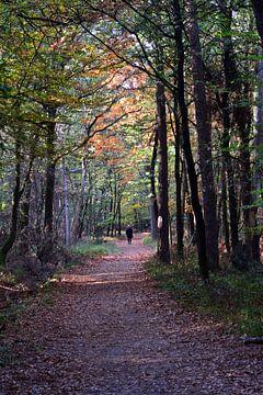 Herbstwanderung im Wald von Gerard de Zwaan