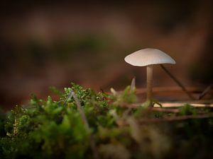 Paddenstoel in het bos van Maikel Brands