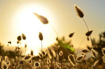 Coucher de soleil portugais sur Markus Rotarius