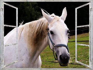 Window View - wit paard van Christine Nöhmeier