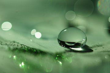 Green Droplet van Carla Mesken-Dijkhoff